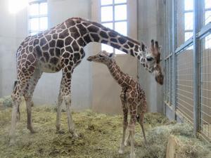 キリナと赤ちゃん